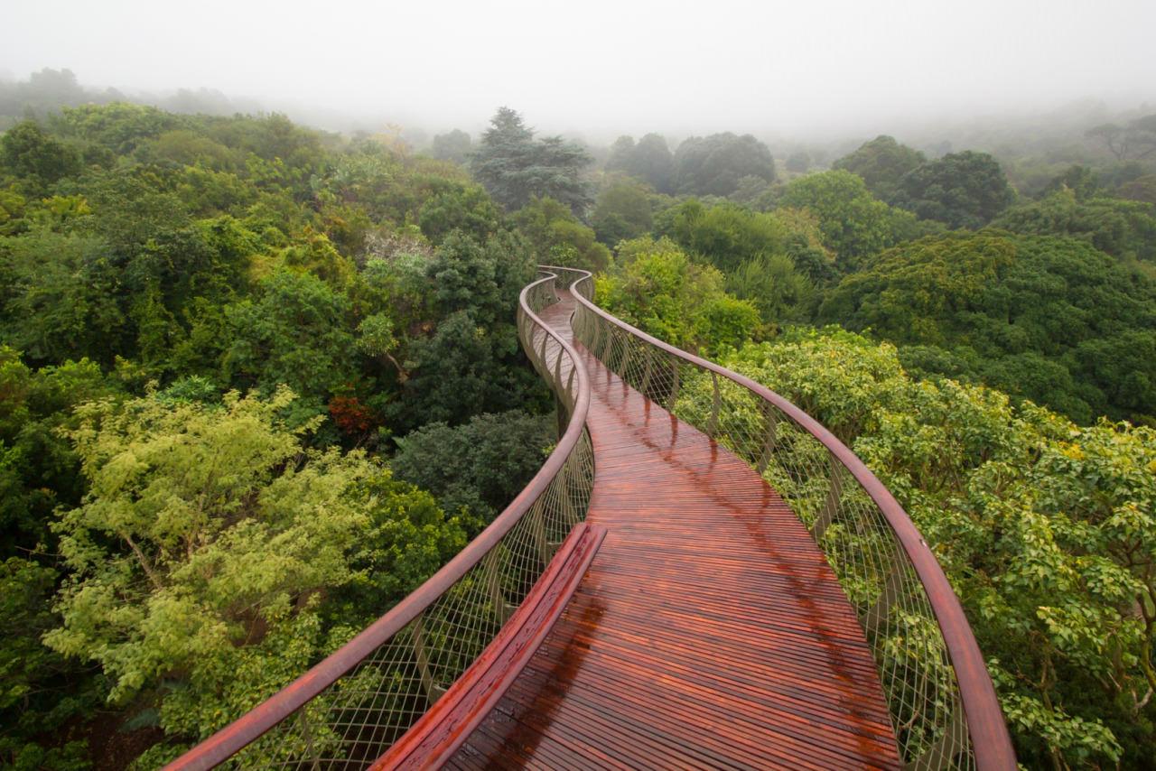 ЮАР приглашает туристов прогуляться над кронами деревьев